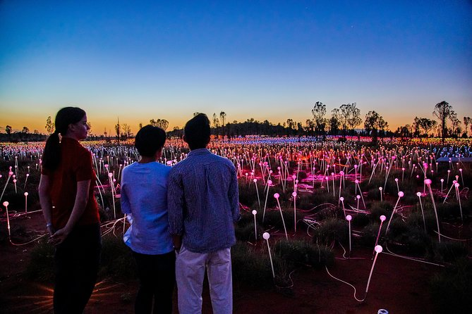 Uluru Field of Light Sunrise Tour - Accommodation in Bendigo