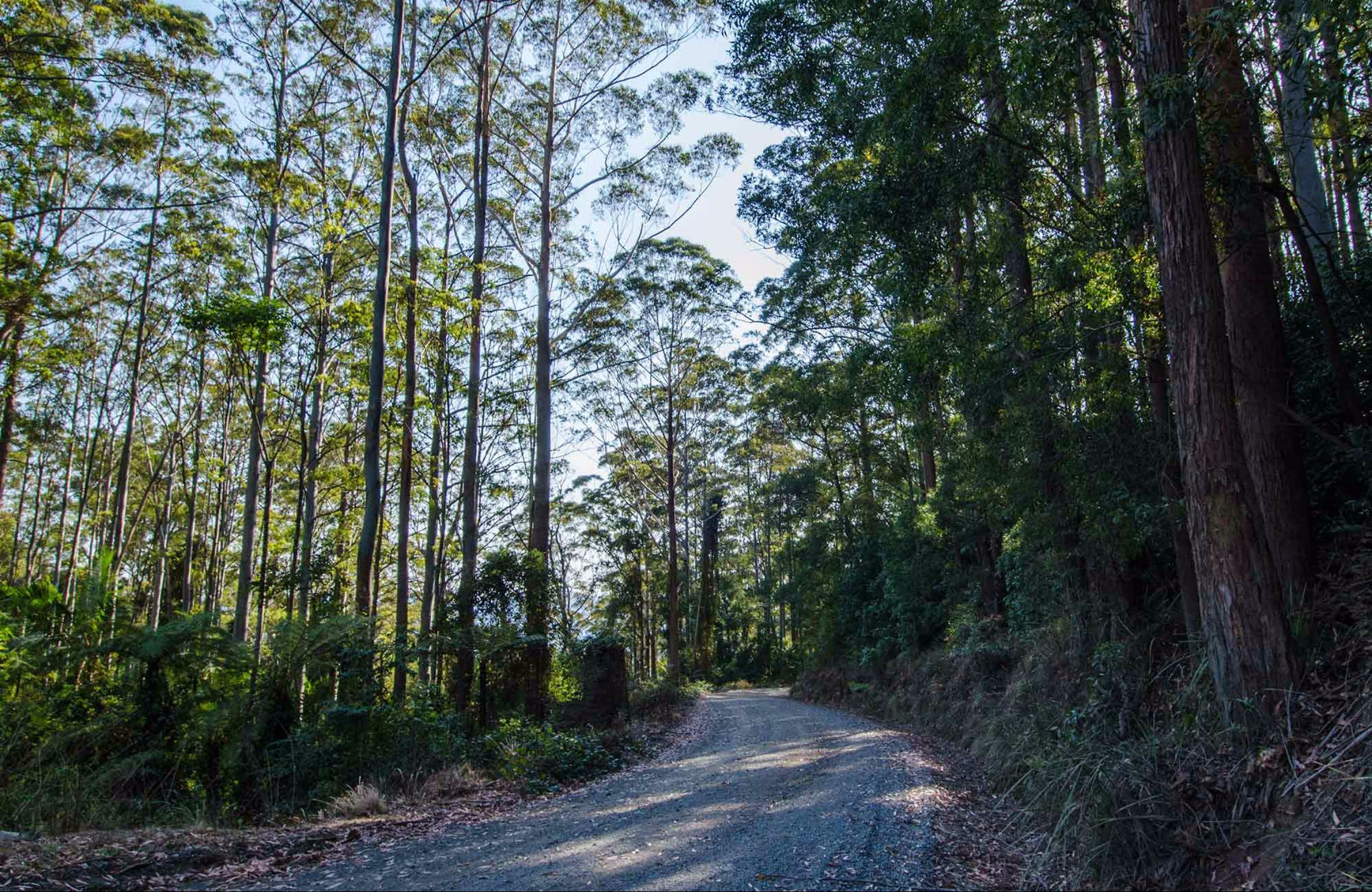 Hastings Forest Way Touring Route - Accommodation in Bendigo