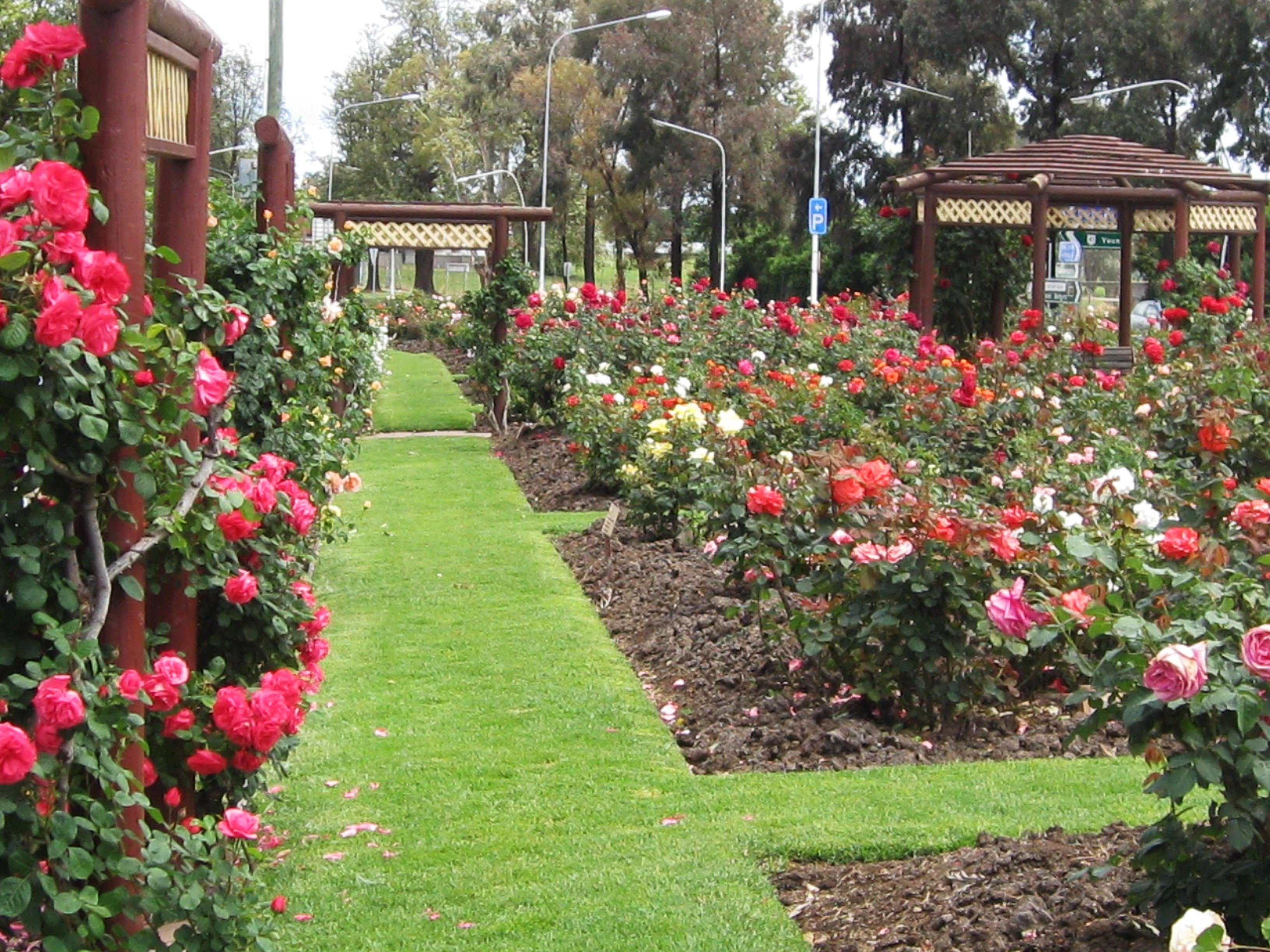 Cowra Rose Garden - Accommodation in Bendigo