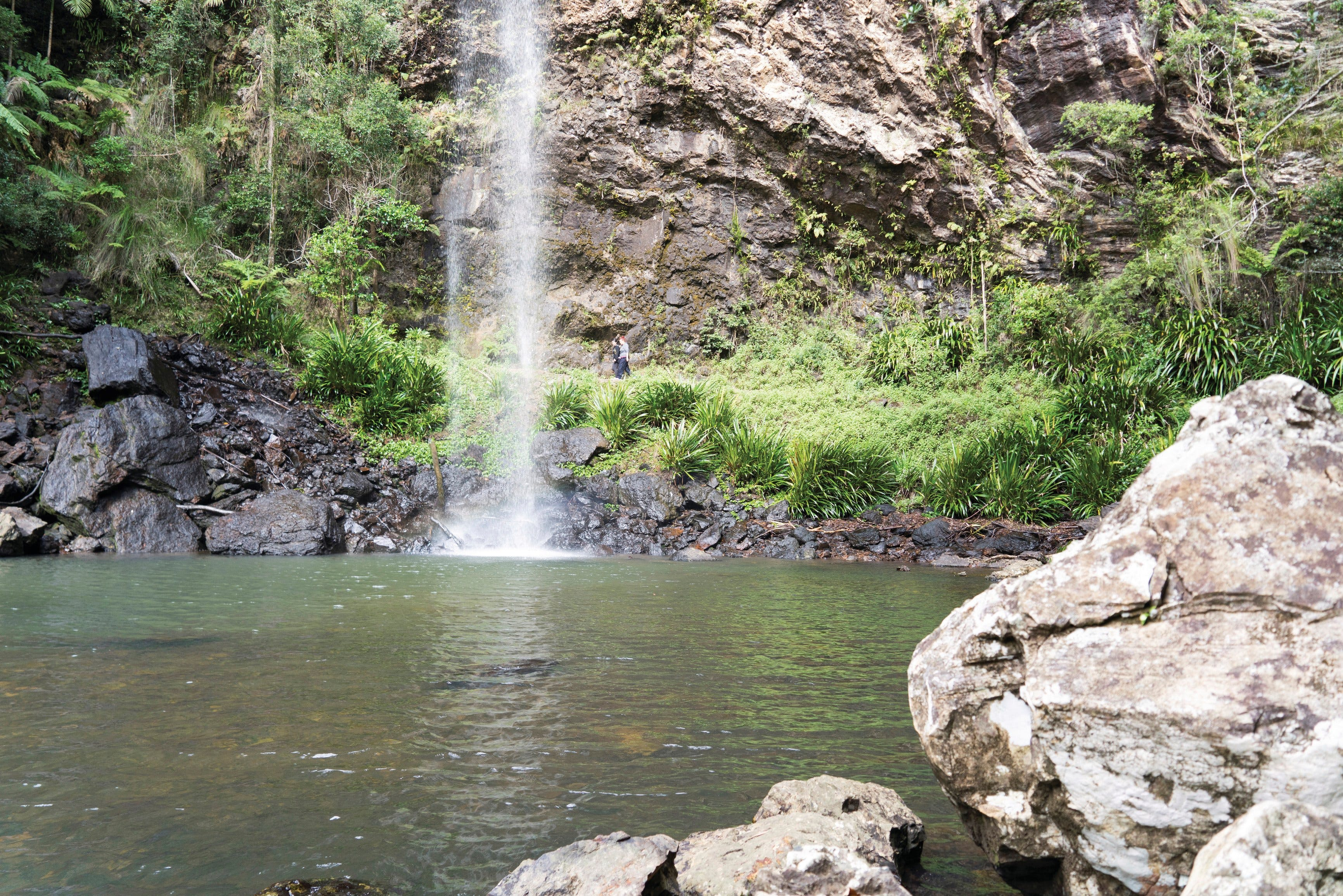 Twin Falls Circuit Springbrook National Park - Accommodation in Bendigo