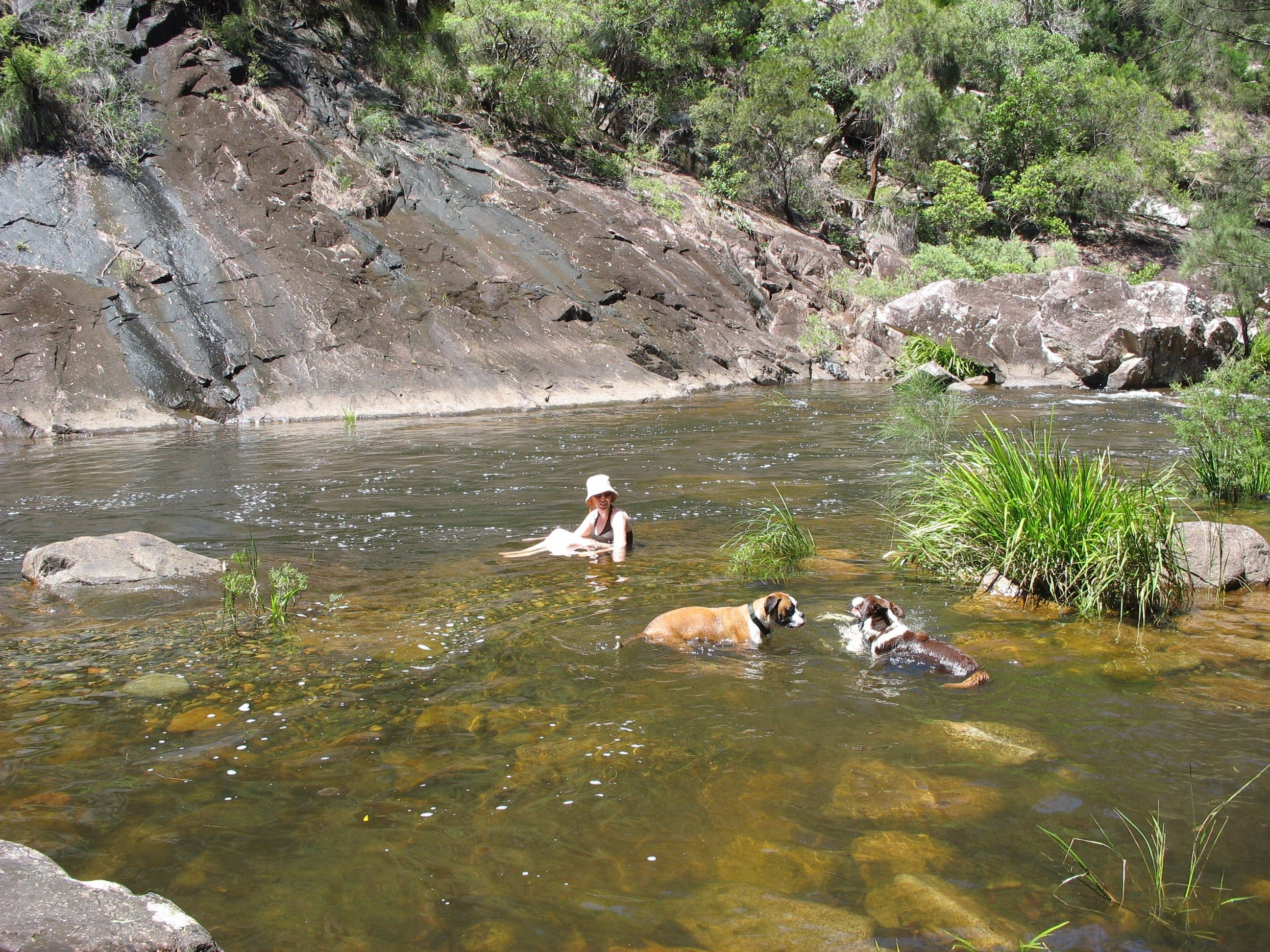Mount Boss State Forest - Accommodation in Bendigo