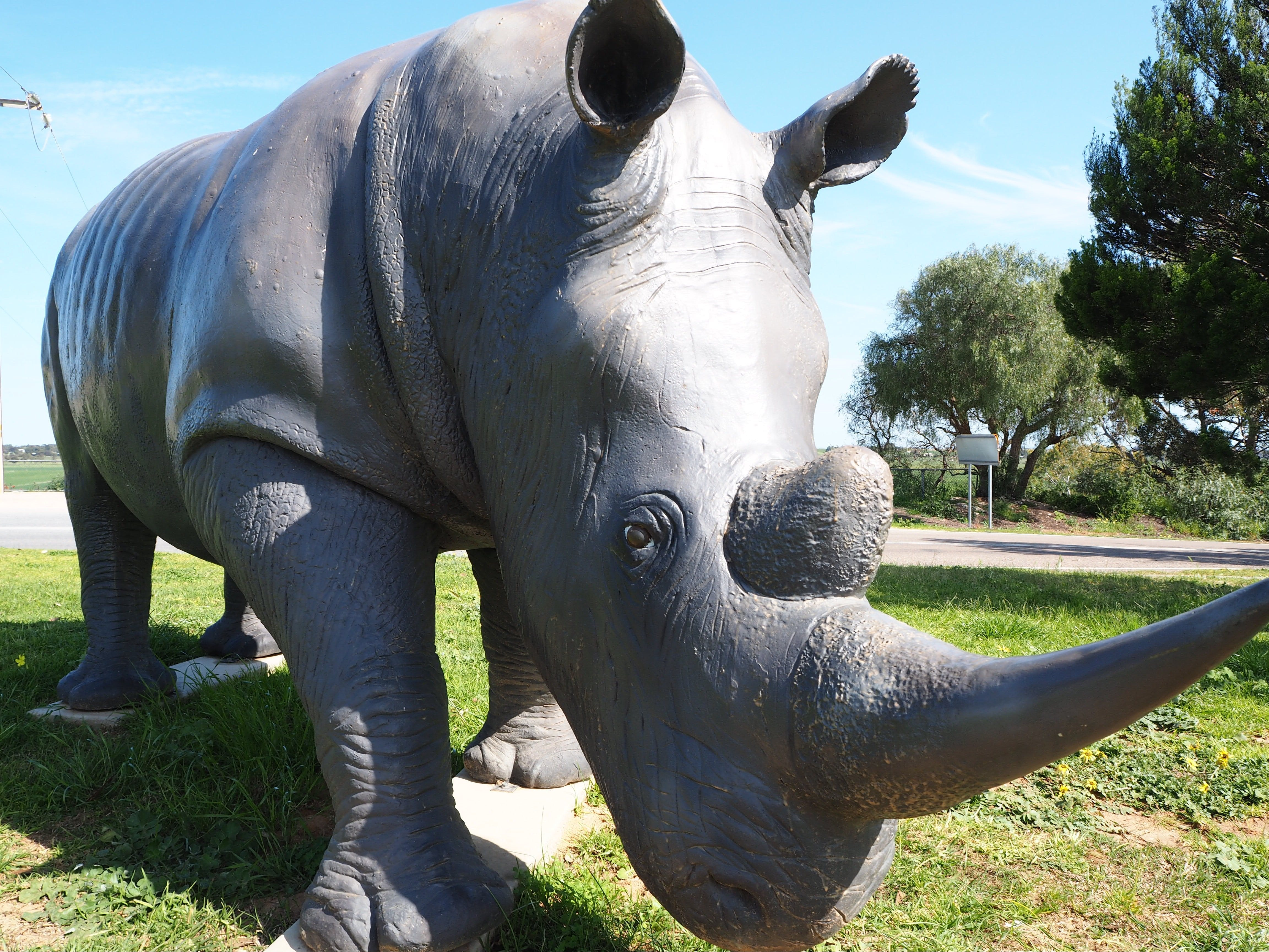 Tailem Bend Rhino Park and Dickson Reserve - Accommodation in Bendigo