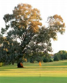 Cowra Golf Club - Accommodation in Bendigo