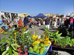Maclean Community Monthly Markets - Accommodation in Bendigo