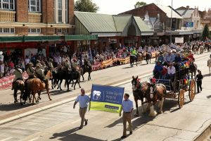 Scone Horse Festival - Accommodation in Bendigo