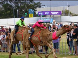 Camel Races at Gosford Showgrounds - Accommodation in Bendigo