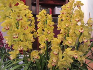 Sapphire Coast Orchid Club Winter Orchid Show - Accommodation in Bendigo