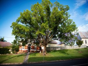 Big Bat Wildlife and Eco Festival - Accommodation in Bendigo