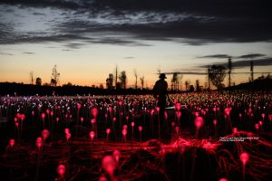 Field of Light Uluru - Accommodation in Bendigo