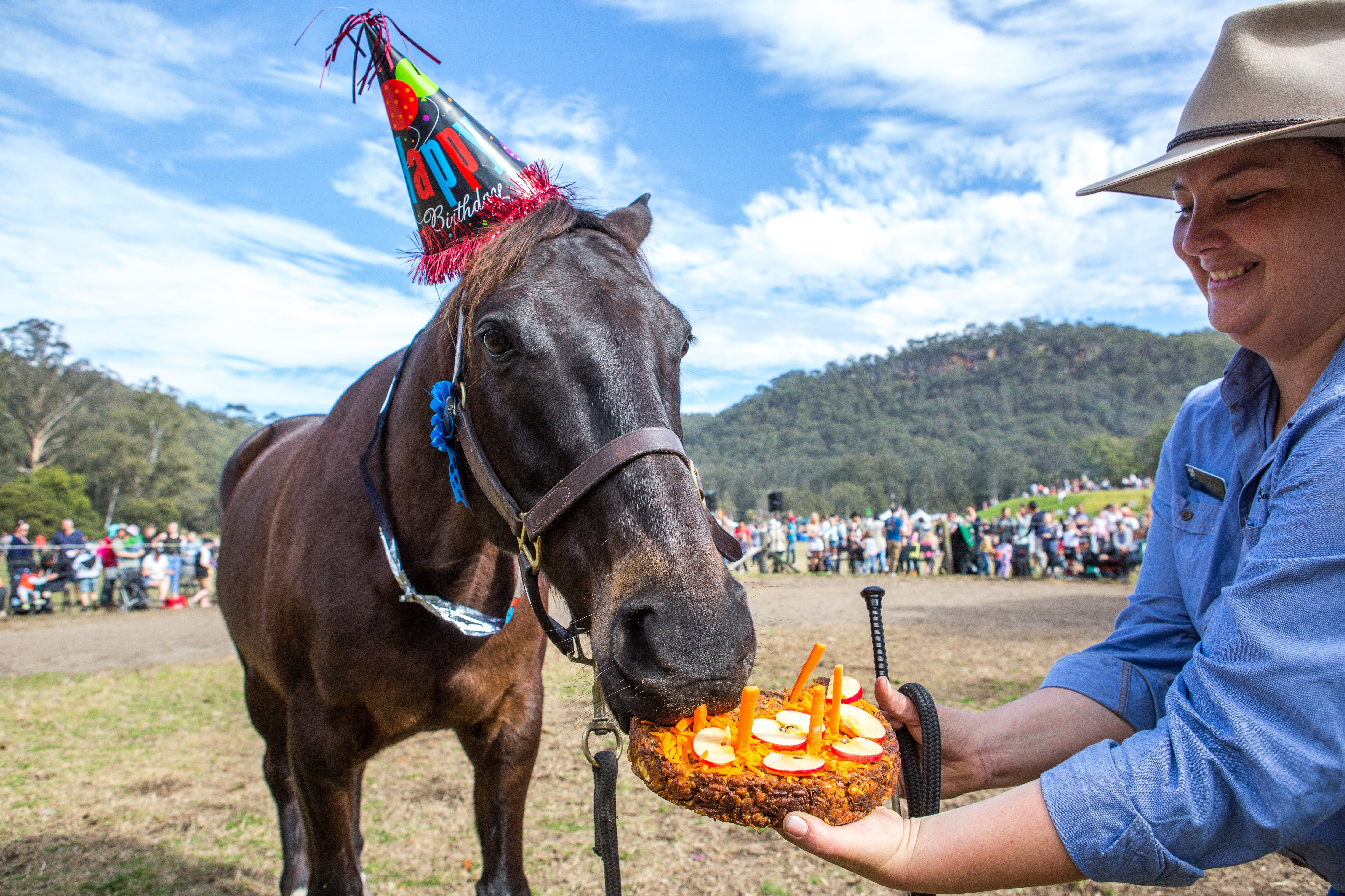 Horses Birthday Festival - Accommodation in Bendigo